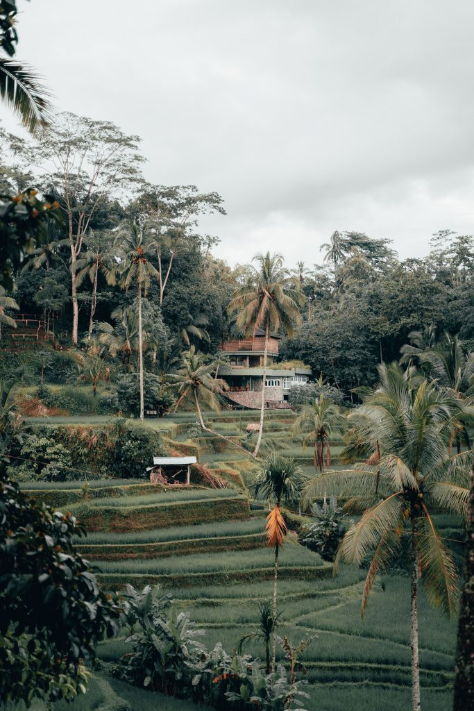 16 Incredible Things to Do in Ubud