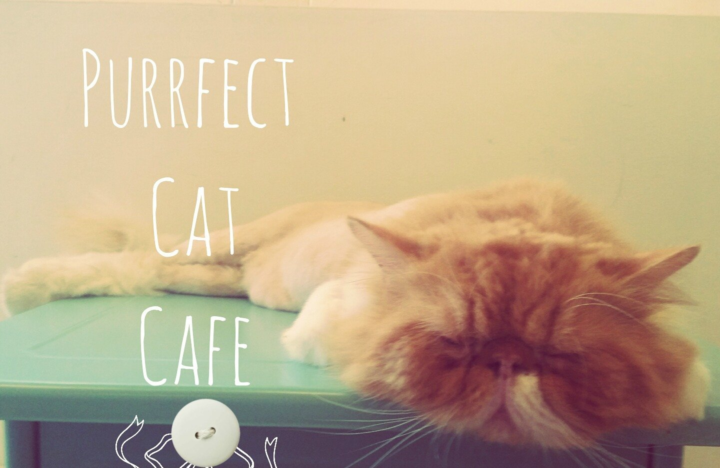 Purrfect Cat Cafe, Penang