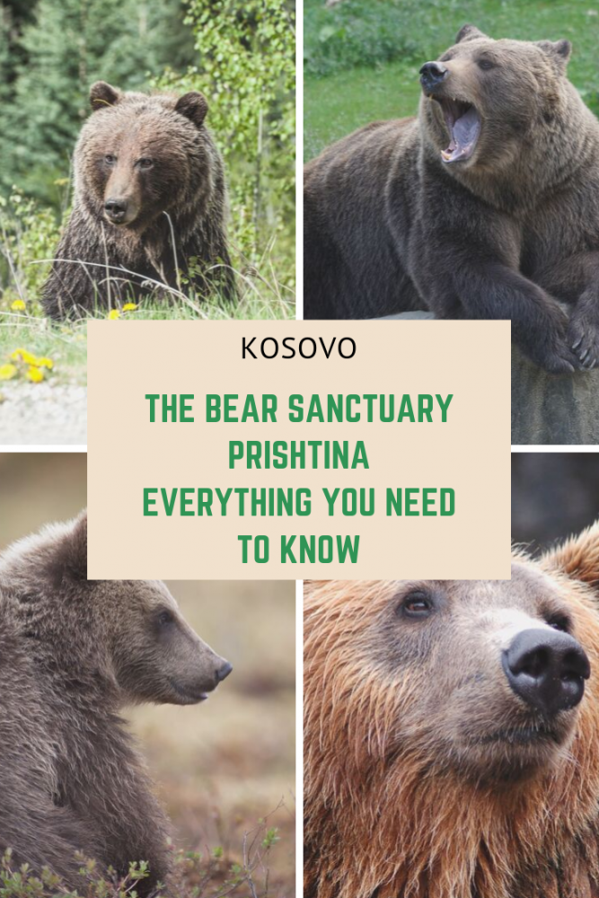The Bear Sanctuary Prishtina - Everything You Need to Know - In this article I will tell you everything you need to know about the Bear Sanctuary Prishtina including how to get there, admission costs, the history of the sanctuary and my experiences visiting! If that sounds good then just keep reading! #pristina #prishtina #kosovo #balkans
