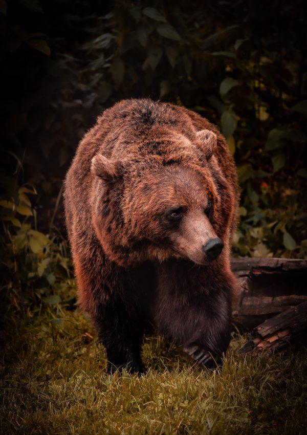 The Bear Sanctuary Prishtina – Everything You Need to Know