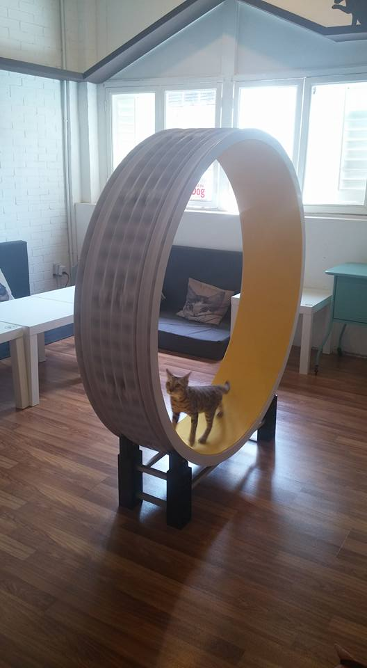 cat cafe penang