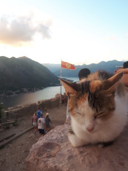 kotor-fortress-cat