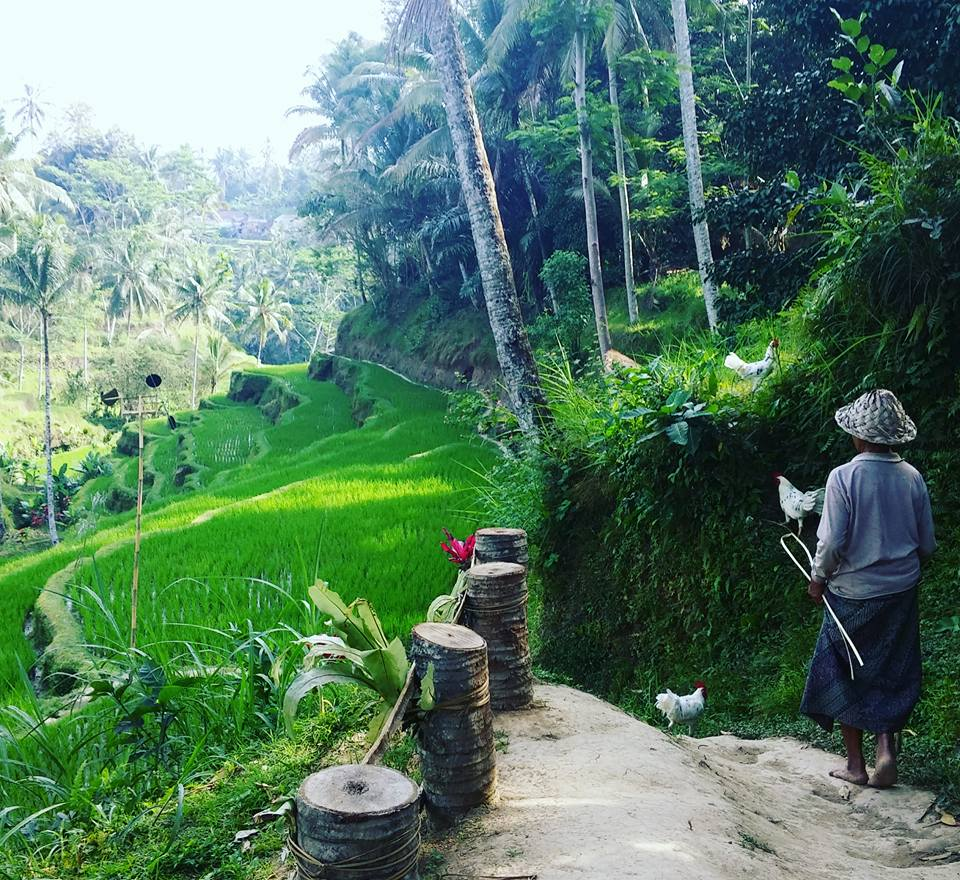 things to see in ubud, rice fields