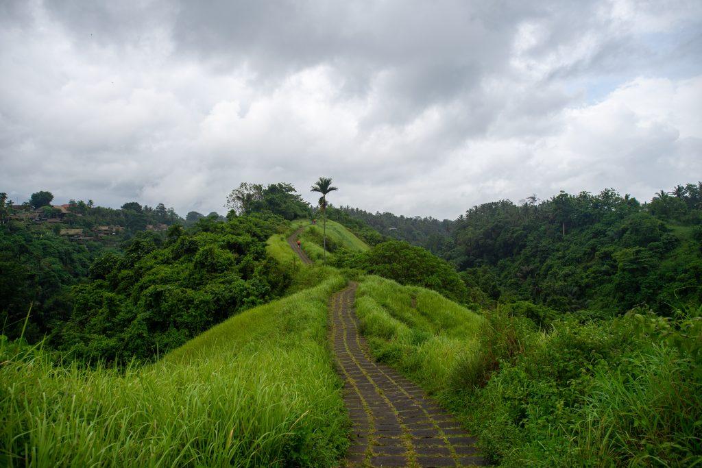 Campuhan ridge walk ubud, things to do in ubud