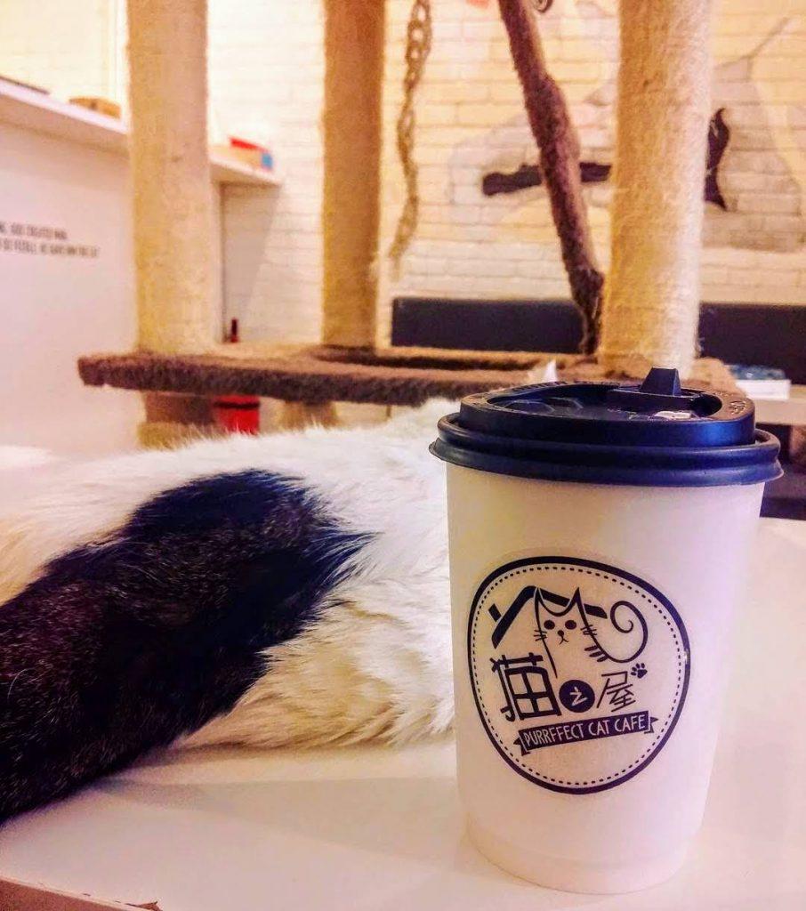purrfect cat cafe penang